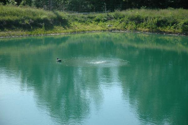 pond-water-b2